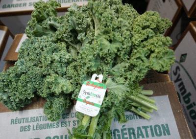 kale ready to ship